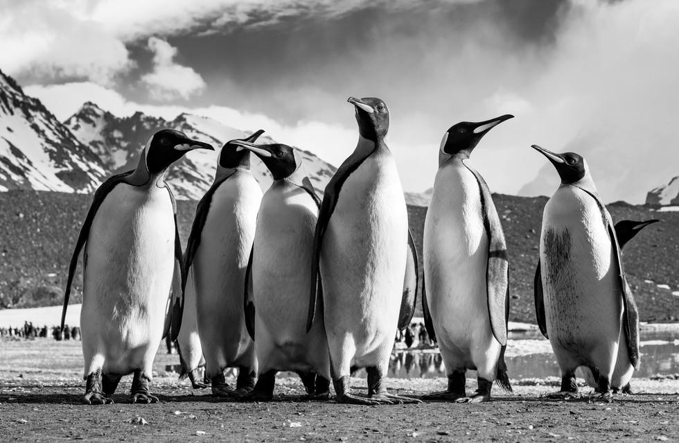 Guardians of the Antarctic
