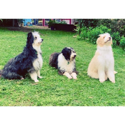 Hazel, Banjo & Elvis