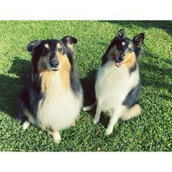 Ollie & Alfie
