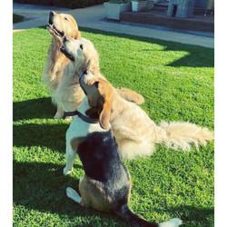 Max, Zoe & Hudson