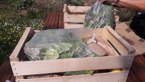Paniers de légumes à 8€ et plaques d'œufs à 5€ à commander avant le 20 octobre 2021