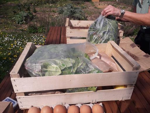 Paniers de légumes à 8€ et plaques d'œufs à 5€
