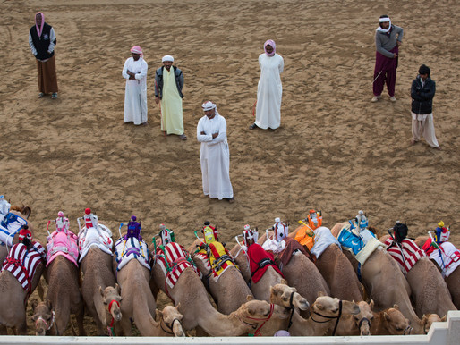 Behind the Scenes at the Camel Racecourse in Dubai
