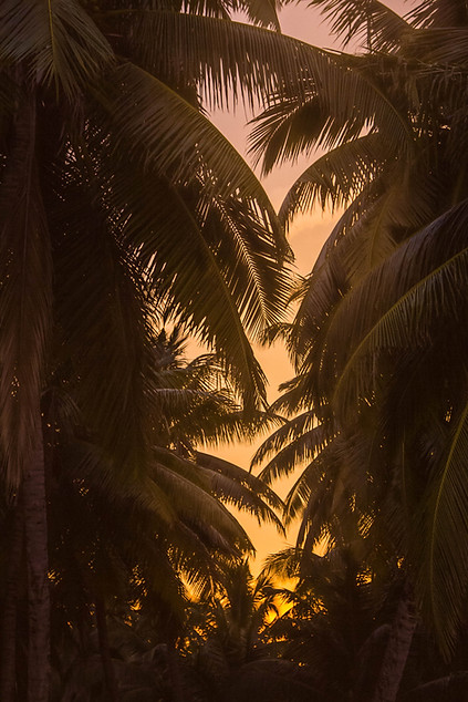 Nature Photography palm fronds in sunset in Andaman Islands