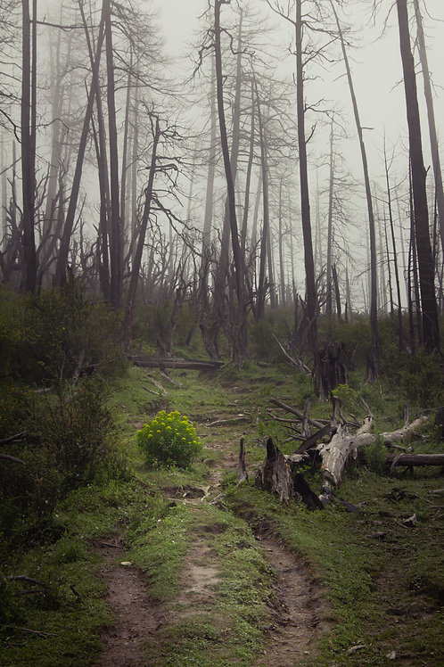 Forlorn Forest