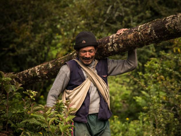 Travel Photography Nepali Man Carries Tree