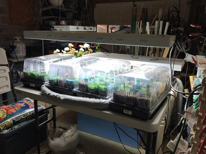 seedlings under hoods.jpg