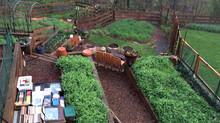 Getting ready for the 2015 gardening season