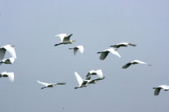 Las lecciones de los gansos: Trabajo en equipo