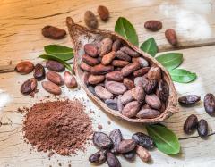 Lo que no sabemos del cacao
