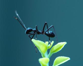 Pete y las hormigas