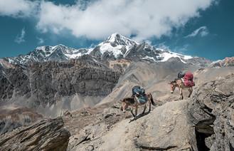 Rastreadores de los valles del Himalaya