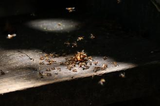 Las termitas
