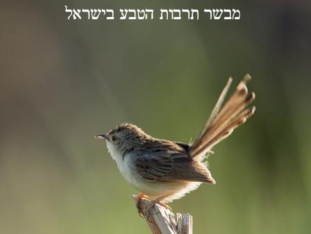 מזל-טוב ענק לניר אליאב על פרסום הספר!