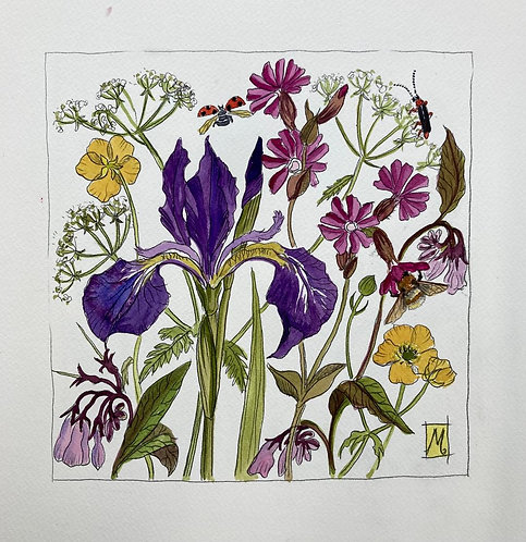 Marie- Therese King Wild flower details with Latin names