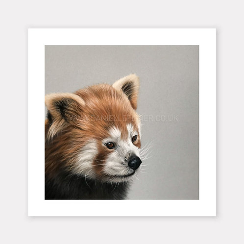 The Red Panda - Limited Edition Print
