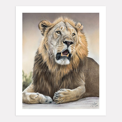 Panthera Leo - Limited Edition Print