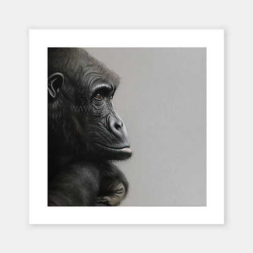 The Western Gorilla - Limited Edition Print