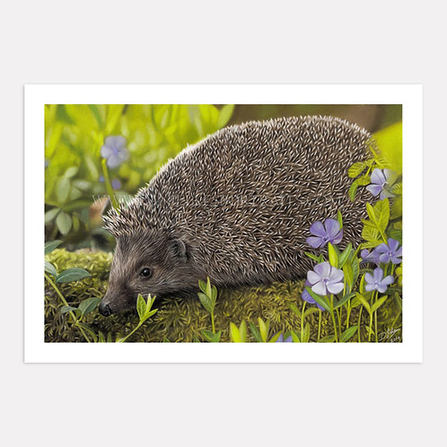 A Welcome Visitor - Limited Edition Print