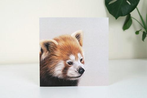 The Red Panda - Greetings Card