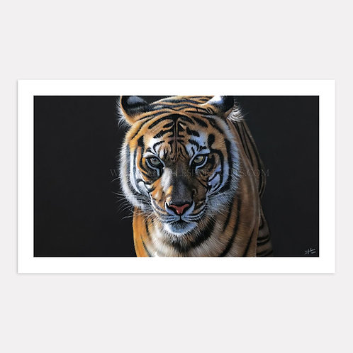 Eye Spy - Limited Edition Print