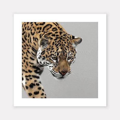 The Jaguar - Limited Edition Print