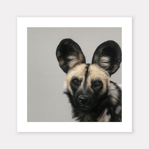 The African Wild Dog - Limited Edition Print