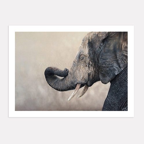 Tembo - Limited Edition Print