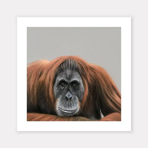 The Orangutan - Limited Edition Print