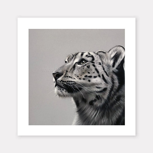 The Snow Leopard - Limited Edition Print