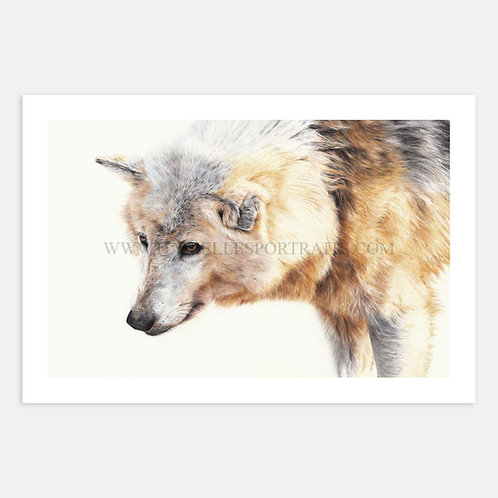 Lone Wolf - Limited Edition Print