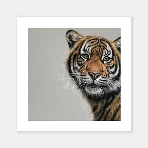 The Sumatran Tiger - Limited Edition Print