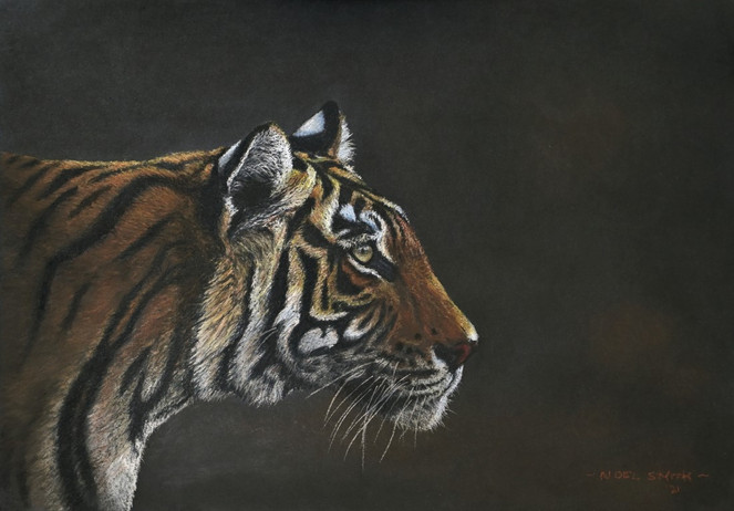 Tiger_20211009_100921_final.jpg