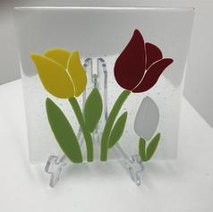 Tulip Plare