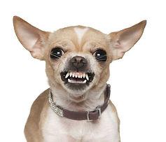 Hund aggr 2.jpg