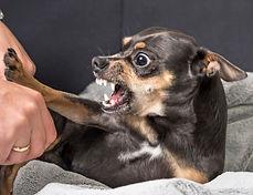 Hund aggr 1.jpg