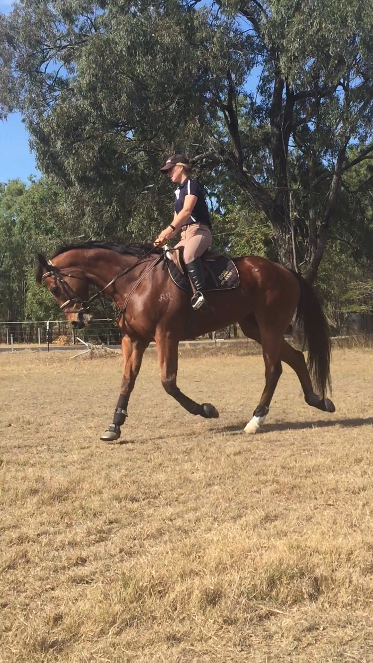 Simple flatwork asks a lot from the horses head/poll