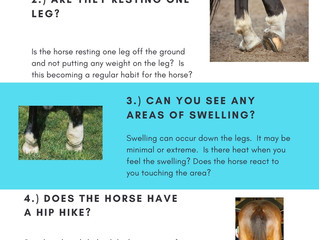 5 Questions on Lameness- Is my horse LAME?