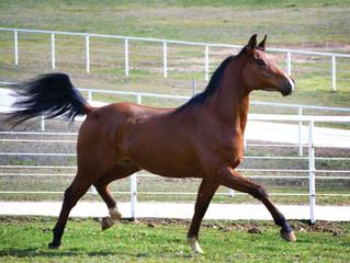 Understanding Horses Get STRESSED Too!