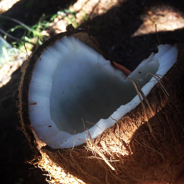 Cracking open coconuts! #coconut #afternoonsnack #camping