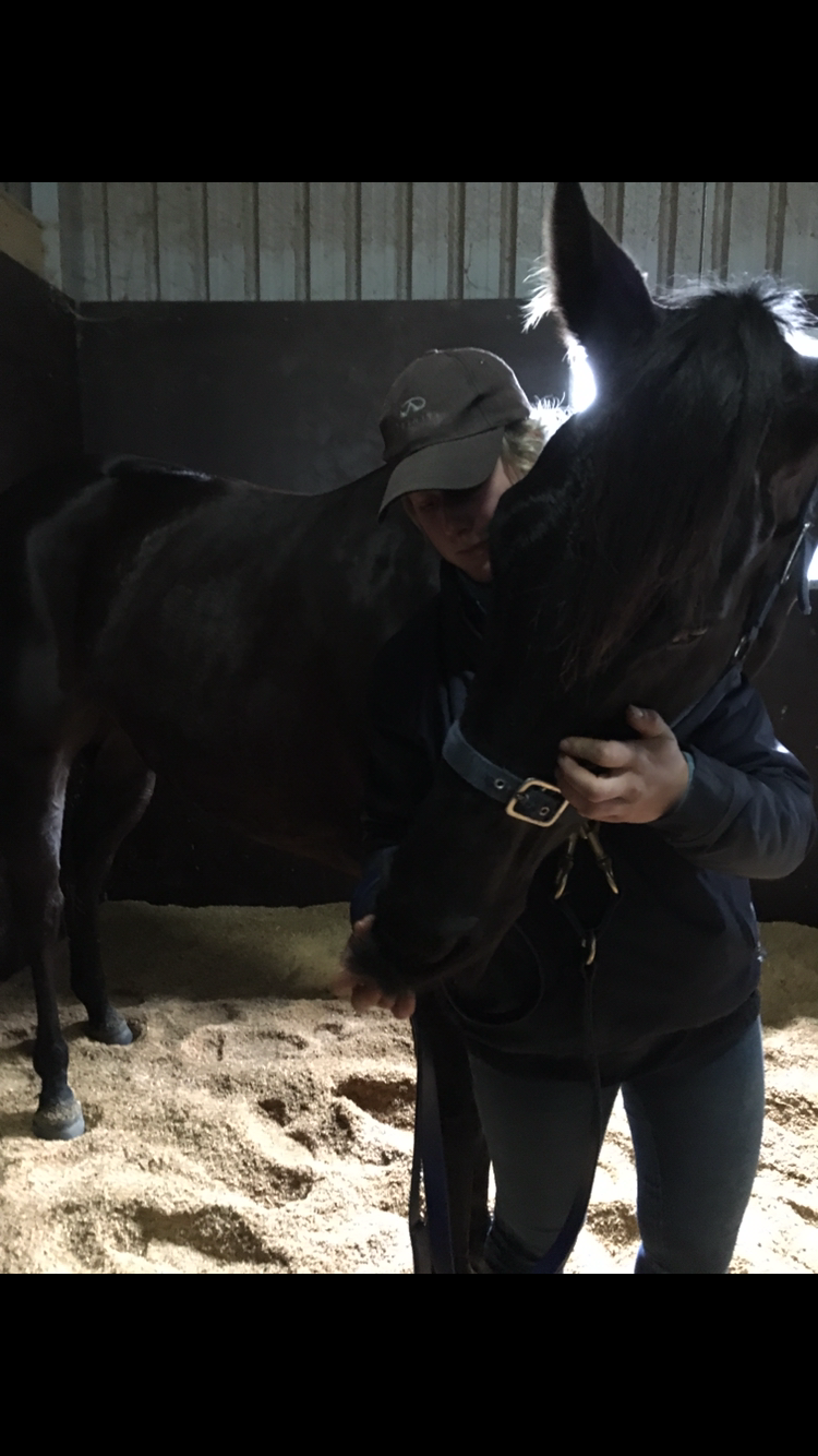 One of the racehorses stretching after a Bowen Therapy Treatment