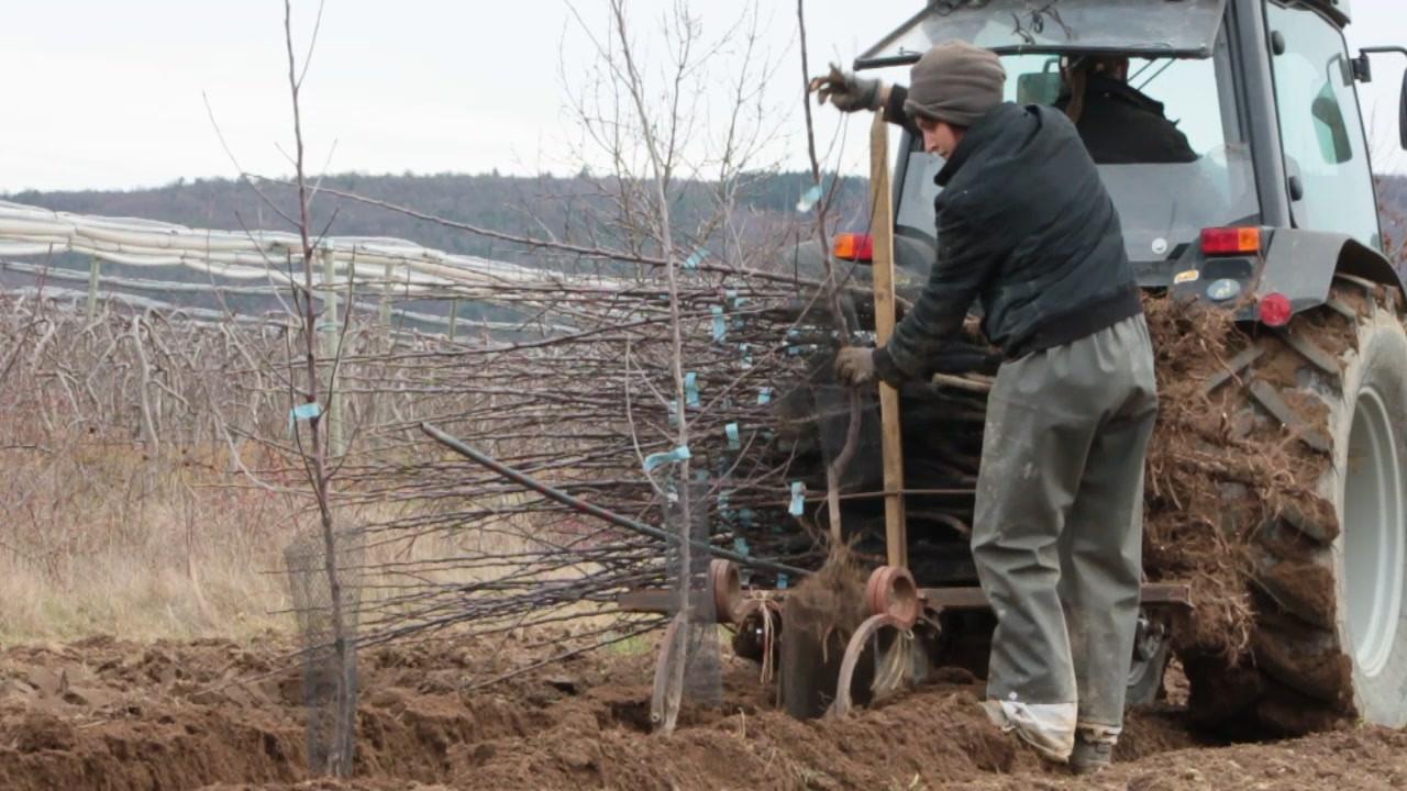 Plantation de jeunes arbres.MOV