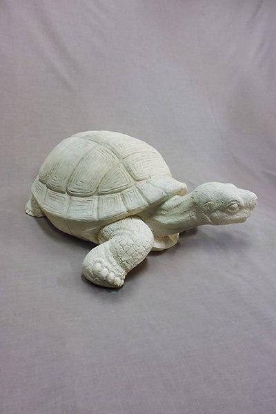 Tortoise – Large