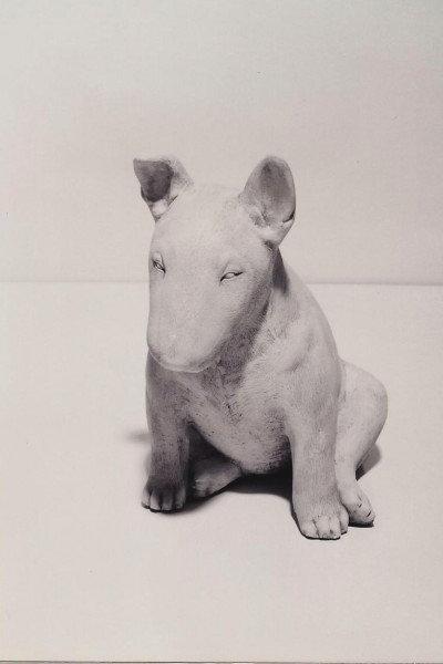 Bull Terrier Pup