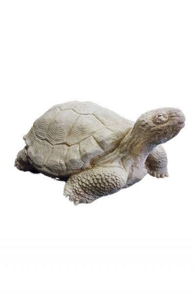 Tortoise – Large Aged
