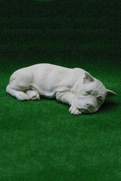 Boxer Dog Lying