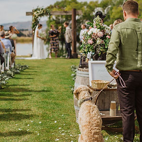 animals-at-weddings.jpg