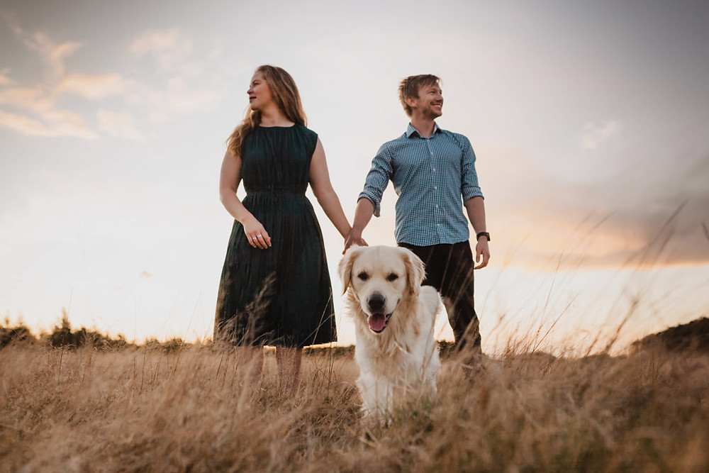 Invercargill photographer - golden field at sunset with dog