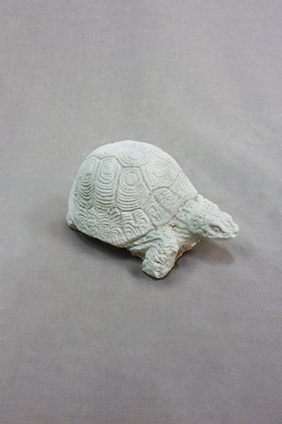 Tortoise – Small