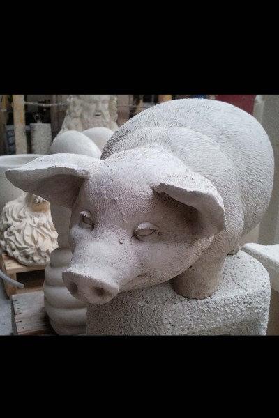 Pig Standing